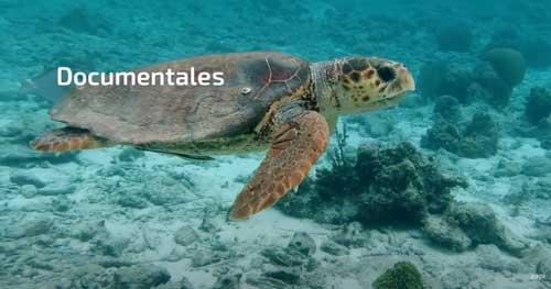 documentales_zapi